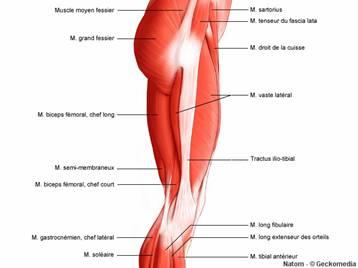 mal au genoux traitement