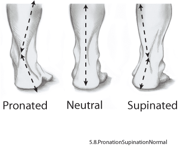 5.8.Pronation.Normal